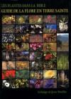 Les plantes dans la Bible – guide de la flore en terre sainte